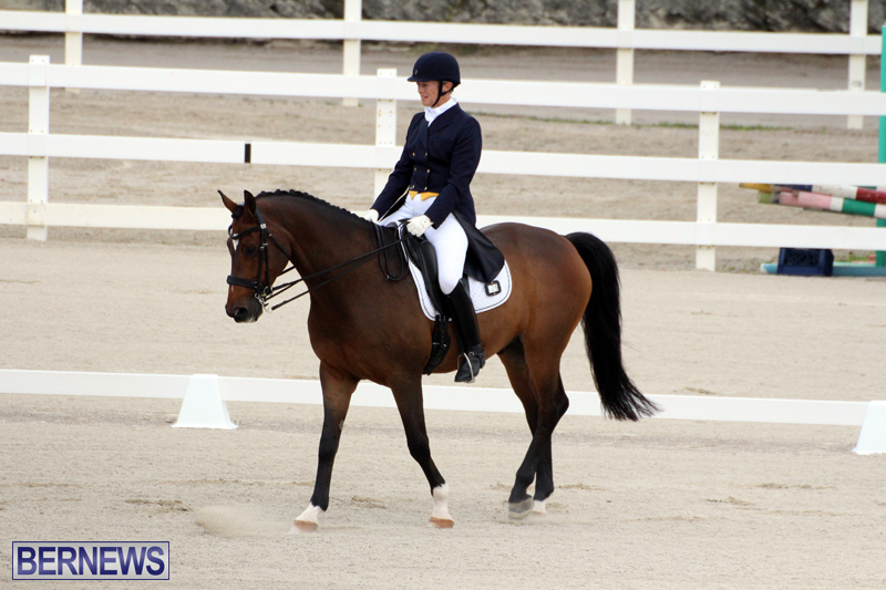FEI-World-Dressage-Challenge-Bermuda-Nov-12-2016-4