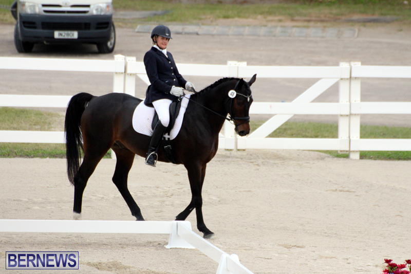 FEI-World-Dressage-Challenge-Bermuda-Nov-12-2016-5