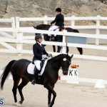 FEI World Dressage Challenge Bermuda Nov 12 2016 (7)