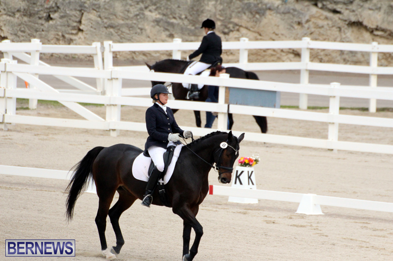 FEI-World-Dressage-Challenge-Bermuda-Nov-12-2016-7