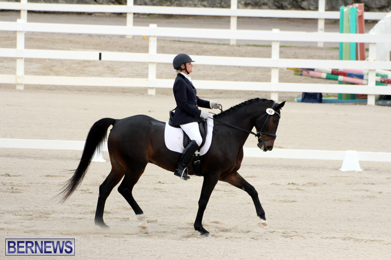 FEI-World-Dressage-Challenge-Bermuda-Nov-12-2016-8