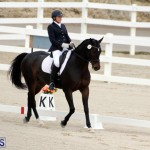 FEI World Dressage Challenge Bermuda Nov 12 2016 (9)