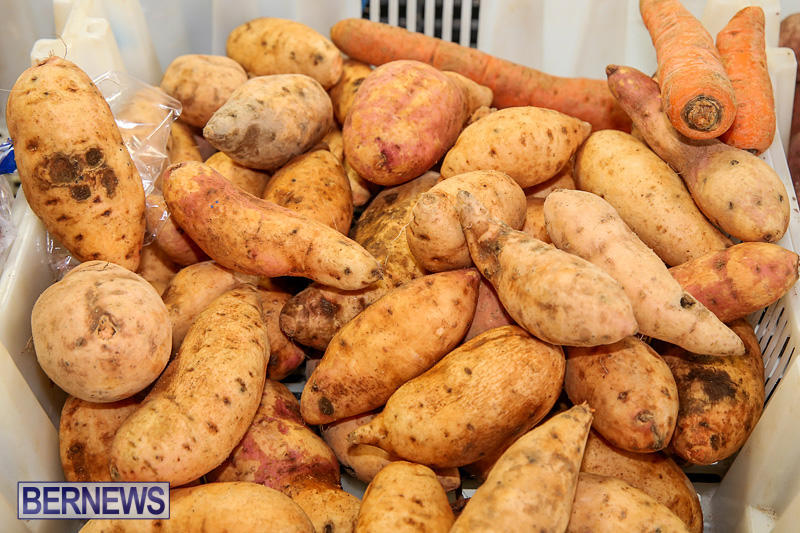 Farmers-Market-Bermuda-November-19-2016-15