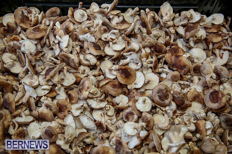 Farmers-Market-Bermuda-November-19-2016-26