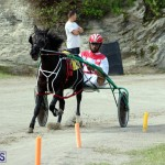 Remembrance Day Harness Racing Bermuda Nov 11 2016 (14)