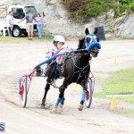 Remembrance Day Harness Racing Bermuda Nov 11 2016 (2)