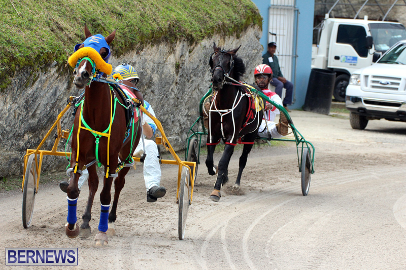 Remembrance-Day-Harness-Racing-Bermuda-Nov-11-2016-3