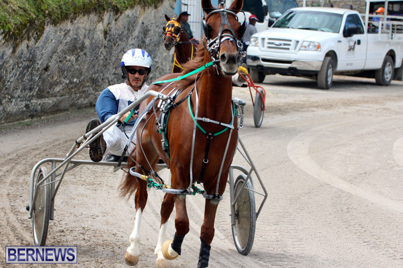 Remembrance-Day-Harness-Racing-Bermuda-Nov-11-2016-4