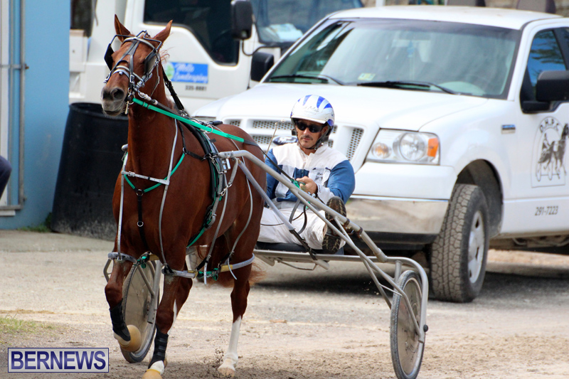 Remembrance-Day-Harness-Racing-Bermuda-Nov-11-2016-8