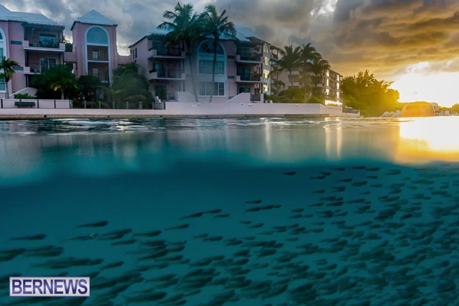 774 Fish Inlet Bermuda Generic Dec 2016