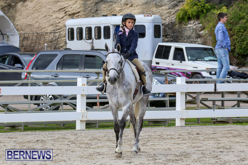 RES-Horse-Show-Bermuda-January-21-2017-1