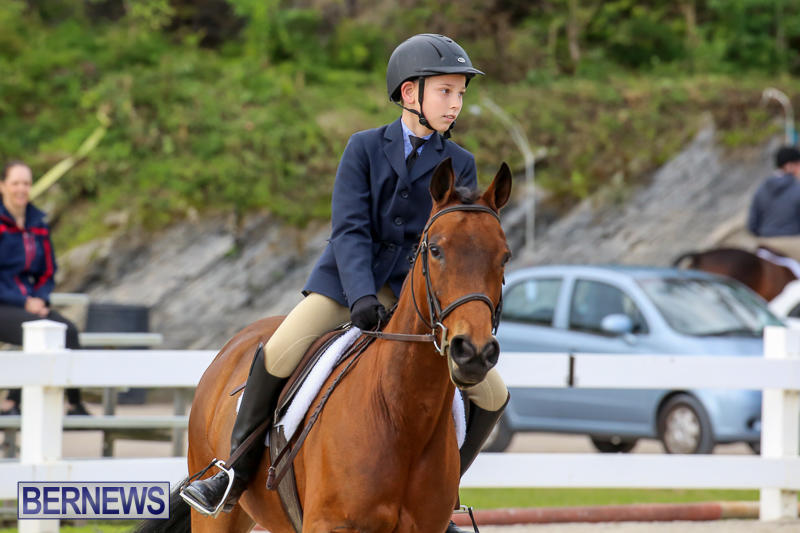 RES-Horse-Show-Bermuda-January-21-2017-12