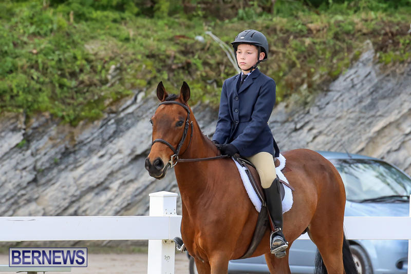 RES-Horse-Show-Bermuda-January-21-2017-17