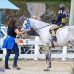 RES Horse Show Bermuda, January 21 2017-26