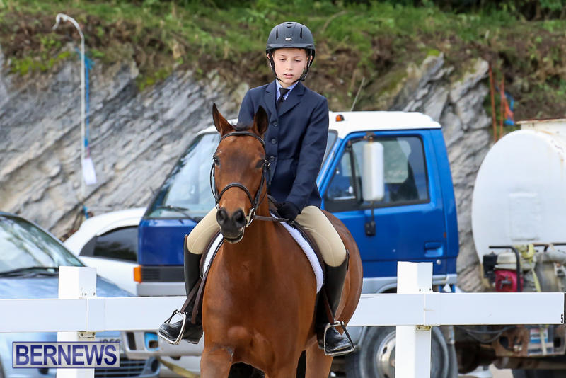 RES-Horse-Show-Bermuda-January-21-2017-3
