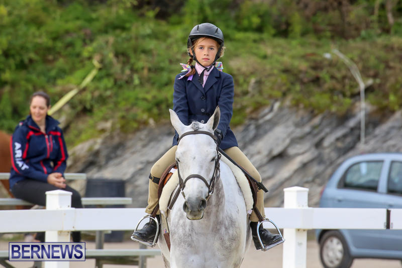 RES-Horse-Show-Bermuda-January-21-2017-4