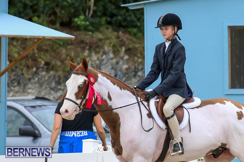 RES-Horse-Show-Bermuda-January-21-2017-43