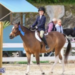RES Horse Show Bermuda, January 21 2017-44