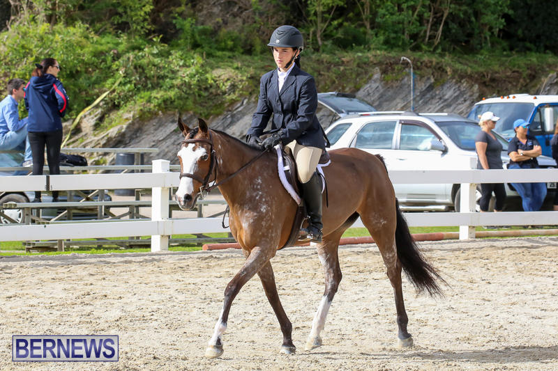 RES-Horse-Show-Bermuda-January-21-2017-49
