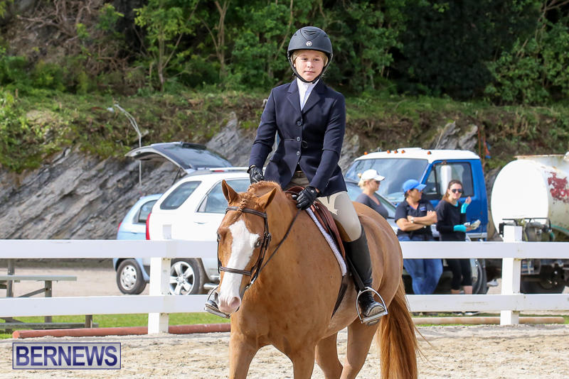 RES-Horse-Show-Bermuda-January-21-2017-51