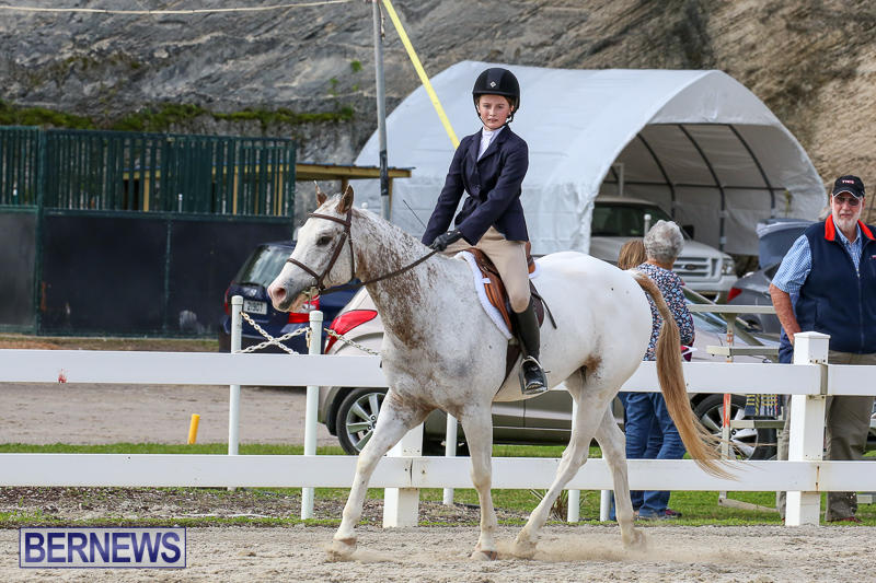 RES-Horse-Show-Bermuda-January-21-2017-52