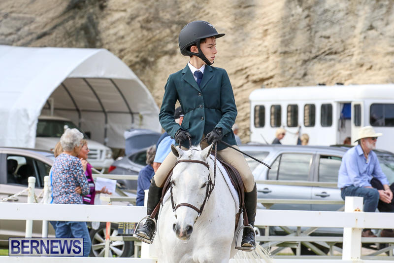 RES-Horse-Show-Bermuda-January-21-2017-54