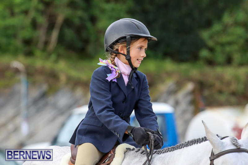 RES-Horse-Show-Bermuda-January-21-2017-6