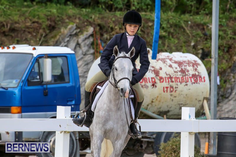 RES-Horse-Show-Bermuda-January-21-2017-7