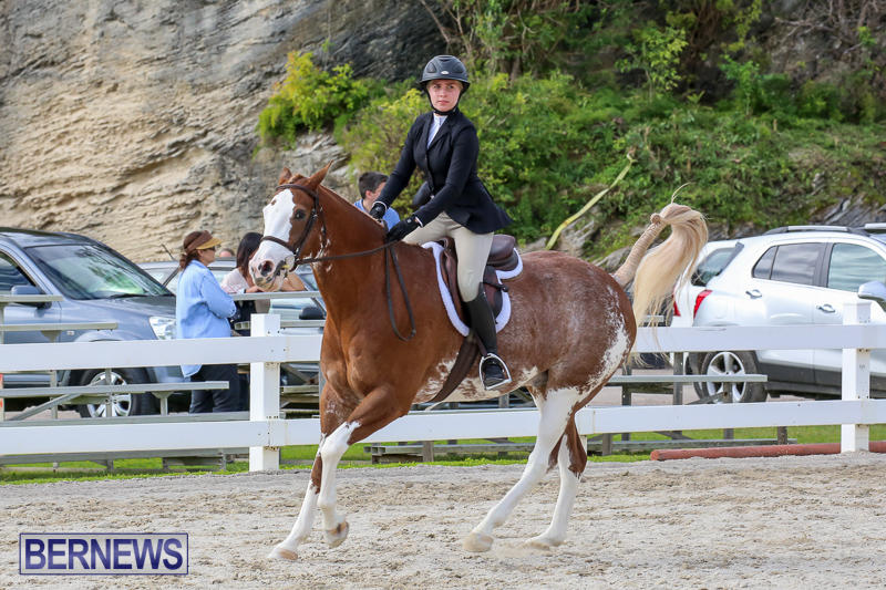 RES-Horse-Show-Bermuda-January-21-2017-83