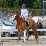 RES Horse Show Bermuda, January 21 2017-84