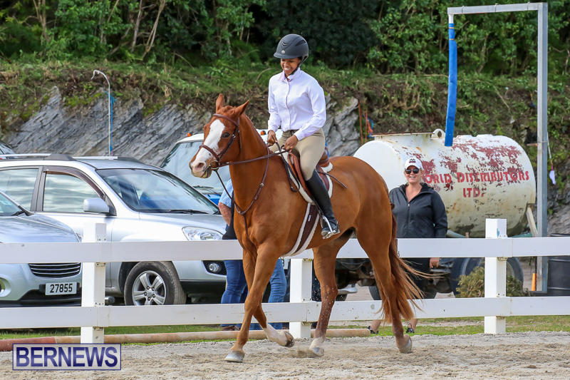 RES-Horse-Show-Bermuda-January-21-2017-84