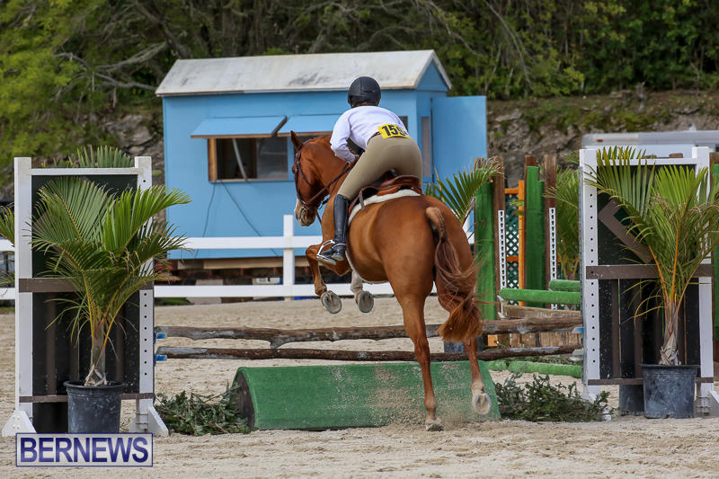 RES-Horse-Show-Bermuda-January-21-2017-92