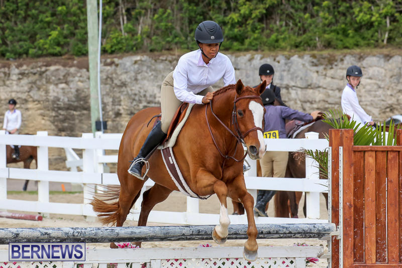 RES-Horse-Show-Bermuda-January-21-2017-99