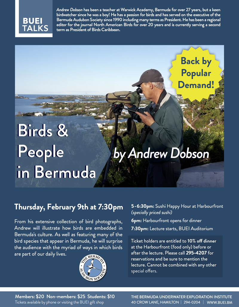 Birds and People Bermuda February 2017