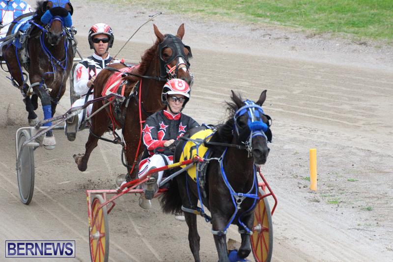 Harness-Pony-Final-Bermuda-Feb-18-2017-3