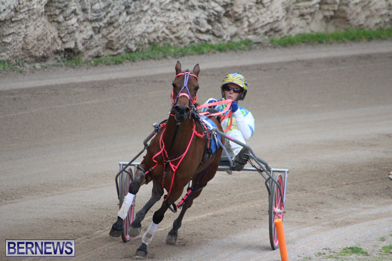 Harness-Pony-Final-Bermuda-Feb-18-2017-6