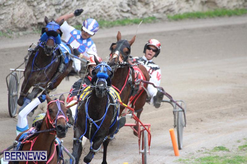 Harness-Pony-Final-Bermuda-Feb-18-2017-7