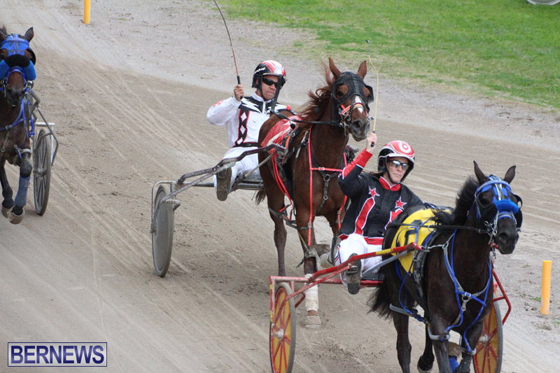 Harness-Pony-Final-Bermuda-Feb-18-2017-8