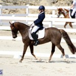 CEA Dressage Competition Bermuda Feb 26 2017 (1)