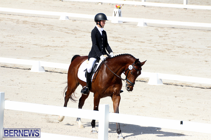 CEA-Dressage-Competition-Bermuda-Feb-26-2017-11