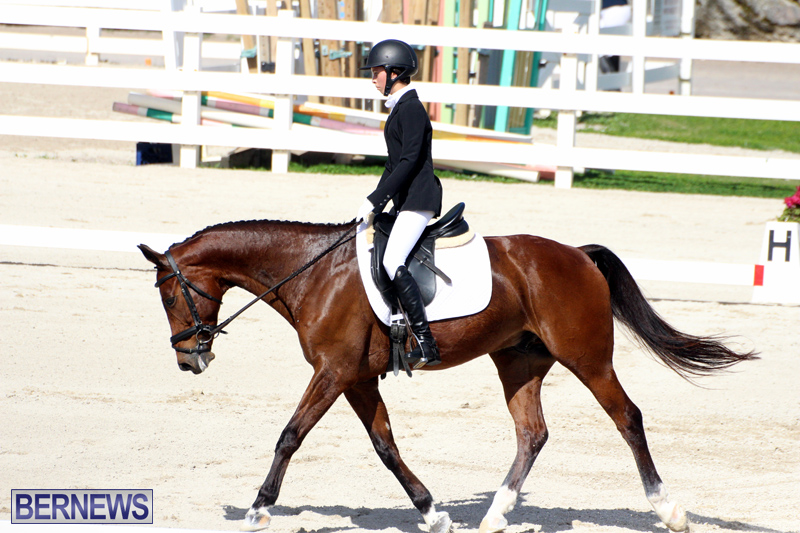 CEA-Dressage-Competition-Bermuda-Feb-26-2017-14