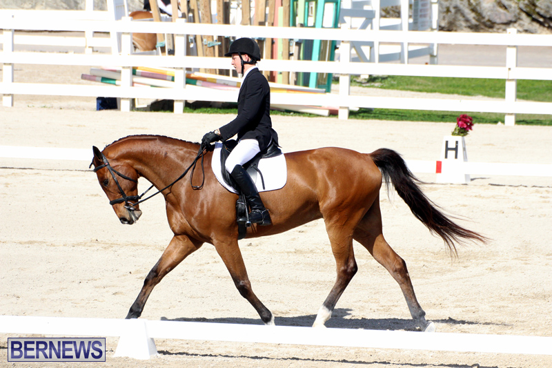 CEA-Dressage-Competition-Bermuda-Feb-26-2017-16