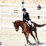 CEA Dressage Competition Bermuda Feb 26 2017 (17)