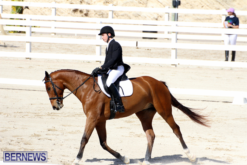 CEA-Dressage-Competition-Bermuda-Feb-26-2017-18