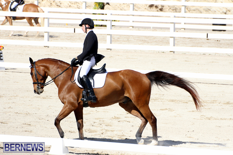 CEA-Dressage-Competition-Bermuda-Feb-26-2017-19