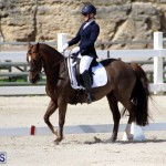 CEA Dressage Competition Bermuda Feb 26 2017 (2)