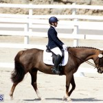 CEA Dressage Competition Bermuda Feb 26 2017 (3)