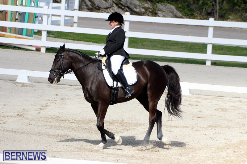 CEA-Dressage-Competition-Bermuda-Feb-26-2017-6