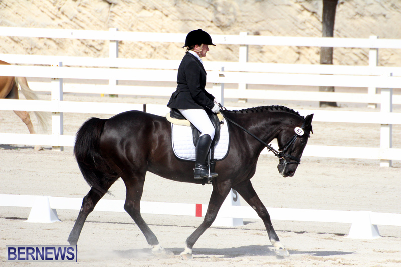 CEA-Dressage-Competition-Bermuda-Feb-26-2017-8