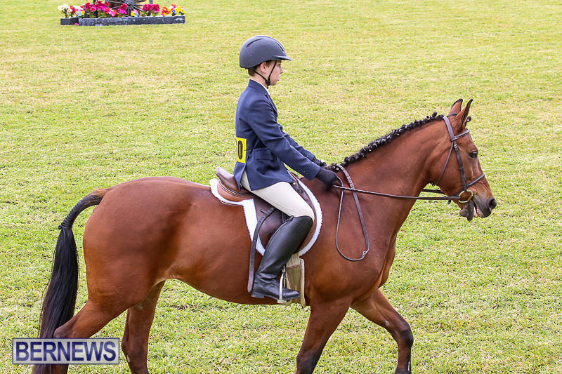 RES-Spring-Horse-Show-Series-Bermuda-March-11-2017-13